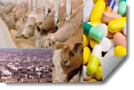 Antibiotics in Livestock Feed
